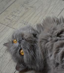 cat-258939_1280