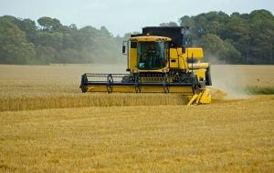 wheat-317021_1280