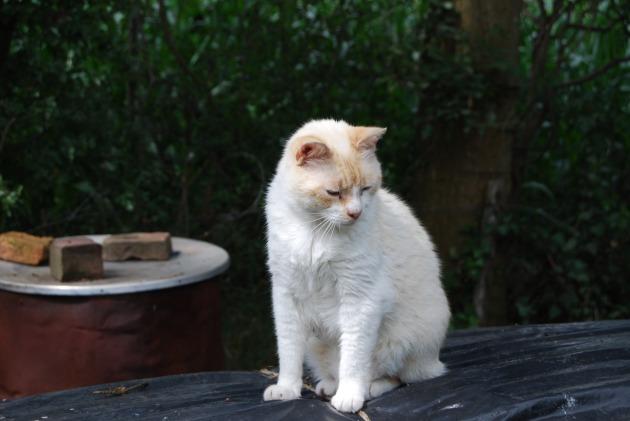 cat-1101747_1920