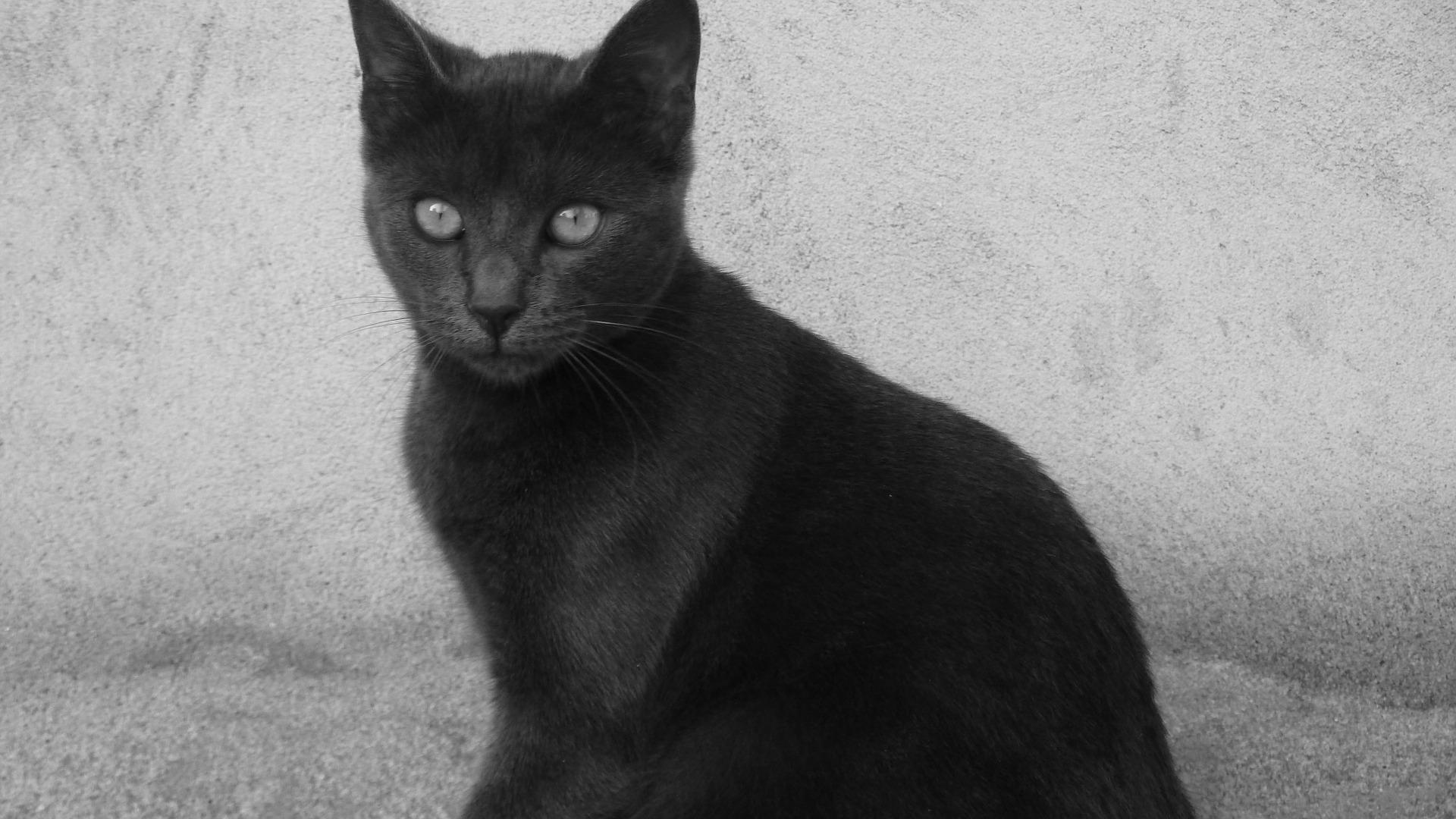 cat-173885_1920.jpg