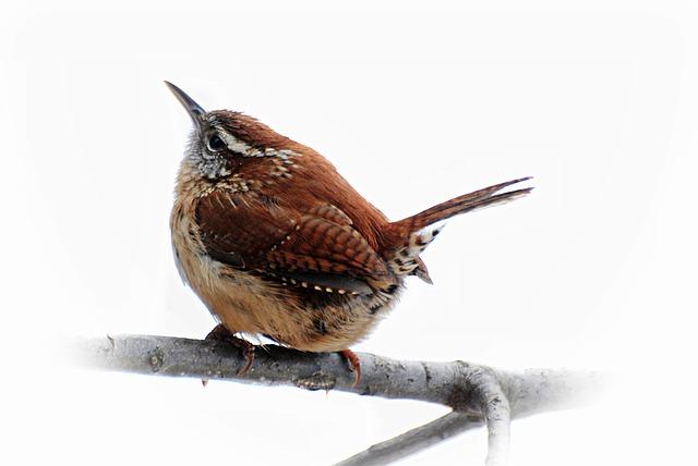 birds-672175_640