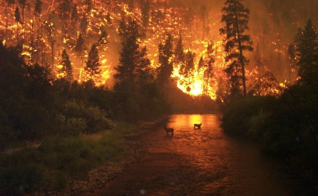 forest-fire-62971_1280