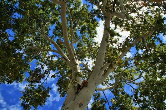 plane-tree-337780_1280