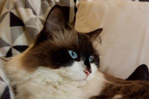 cat-1425419_640