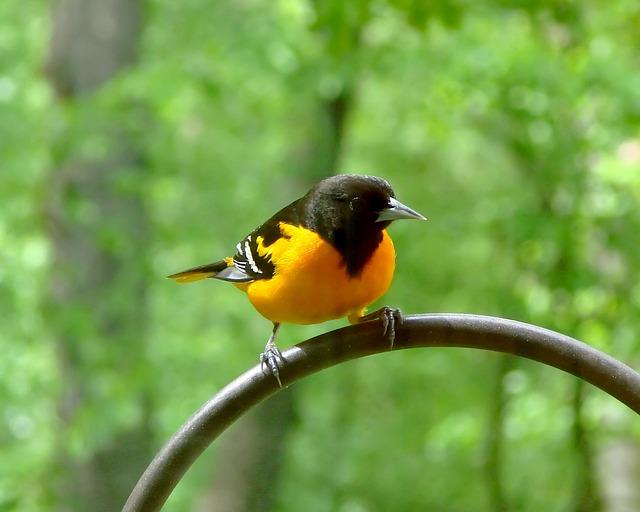 bird-2140675_640