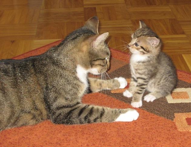 cat-177491_640