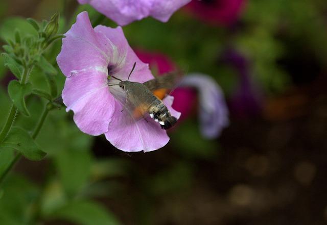 moth-2378240_640