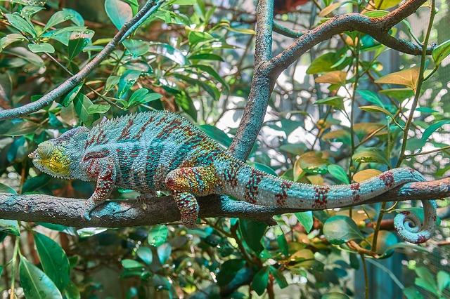chameleon-2645503_640