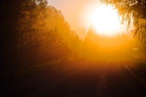 sunlight-71092_640