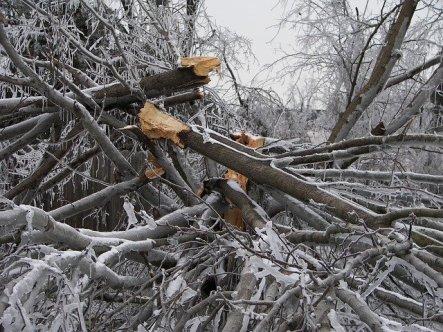 tree-destruction-282553_640